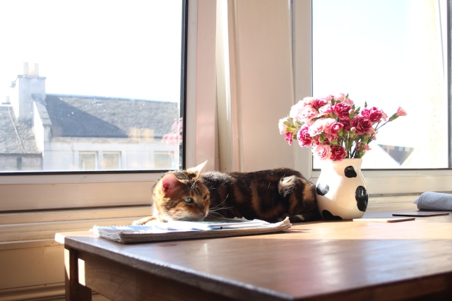 cat + sunshine + flowers